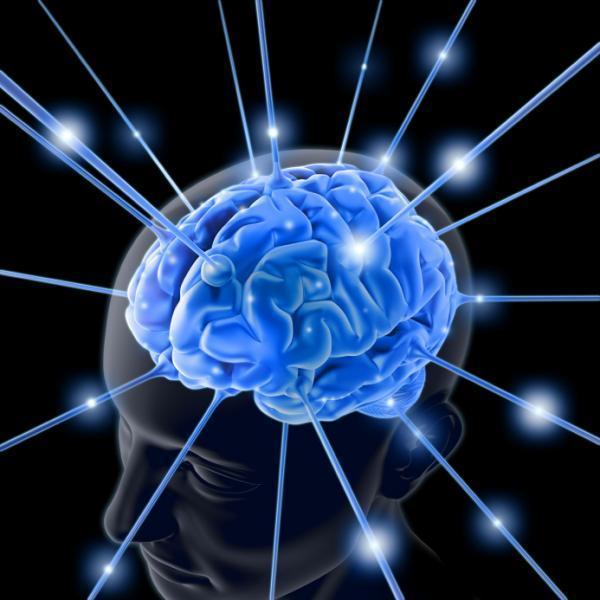 مخ الإنسان